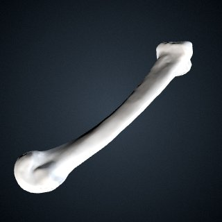 3d model of Pongo abelii: MT2 Left