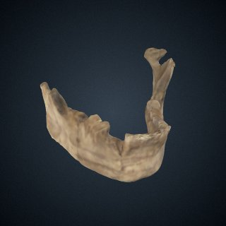 3d model of Homo sapiens: mandible