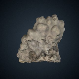 3d model of Porites lobata