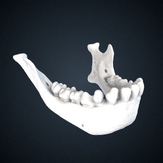 3d model of Hylobates moloch: Mandible