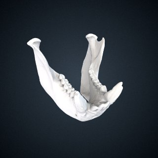 3d model of Chiropotes chiropotes: Mandible