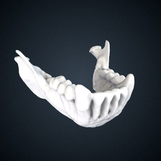 3d model of Cebus albifrons x Sapajus apella: Mandible