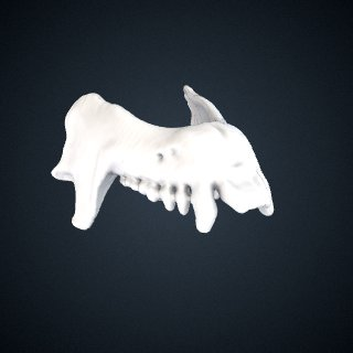 3d model of Nycticebus bengalensis: Mandible