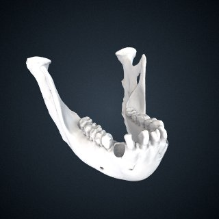 3d model of Pongo pygmaeus: mandible