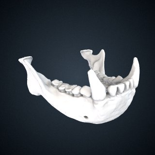 3d model of Nomascus concolor: Mandible