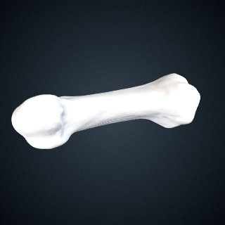 3d model of Pan troglodytes verus: MT1 Left
