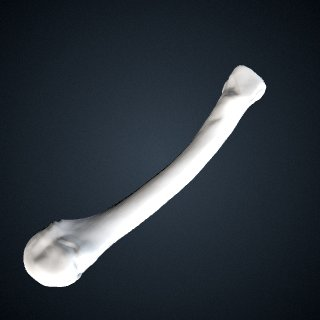 3d model of Pongo abelii: MT5 Left