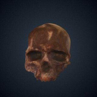 3d model of Homo sapiens: cranium