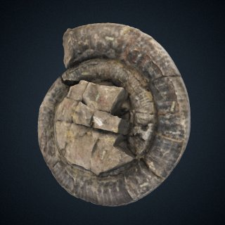 3d model of Stephanoceras (Skirroceras) juhlei Imlay