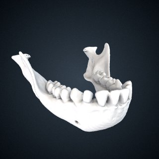 3d model of Hylobates muelleri funereus: Mandible