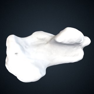 3d model of Pan troglodytes verus: Calcaneus Left
