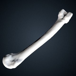 3d model of Pongo abelii: MT3 Right
