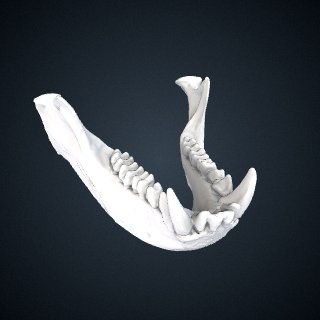 3d model of Trachypithecus germaini caudalis: Mandible