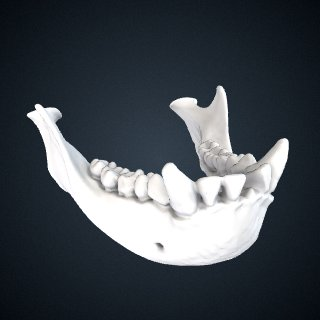 3d model of Hylobates muelleri muelleri: Mandible
