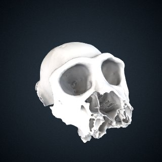 3d model of Pan troglodytes schweinfurthii: Cranium