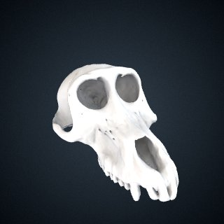3d model of Papio anubis: Cranium