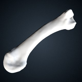 3d model of Pan troglodytes troglodytes: MT3 Left