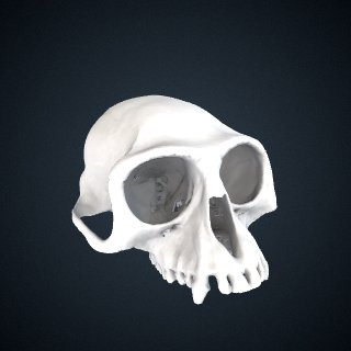 3d model of Semnopithecus priam priam: Cranium
