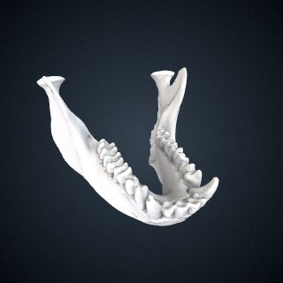 3d model of Pygathrix nemaeus: Mandible