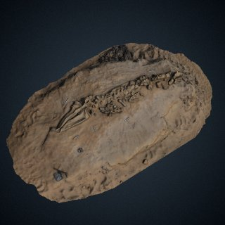 3d model of Fossil whale excavation site MPC 675