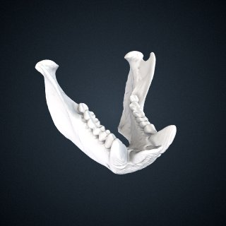 3d model of Chiropotes satanas chiropotes: Mandible
