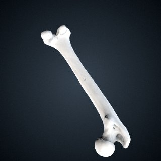 3d model of Pan troglodytes troglodytes: Femur Left