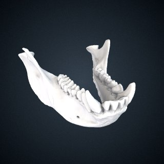 3d model of Trachypithecus phayrei crepusculus: Mandible