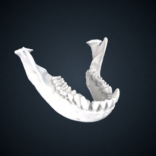 3d model of Presbytis rubicunda carimatae: Mandible