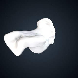 3d model of Pongo abelii: Calcaneus Left