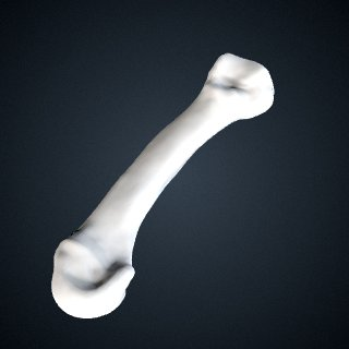 3d model of Pan troglodytes: MT4 Left