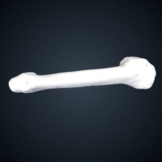 3d model of Pan troglodytes verus: MT5 Left