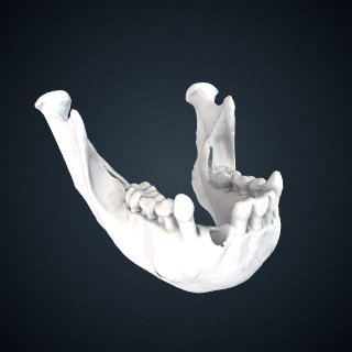 3d model of Pongo abelii: mandible