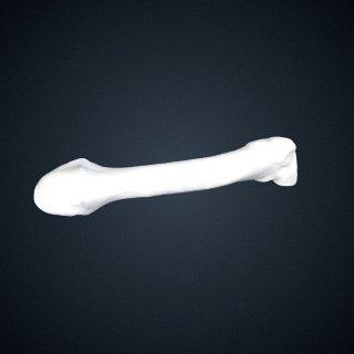 3d model of Pan troglodytes troglodytes: MT4 Left