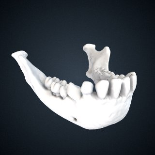 3d model of Hylobates klossii: Mandible