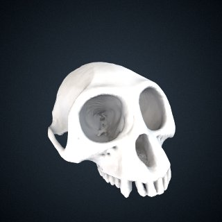 3d model of Trachypithecus germaini germaini: Cranium