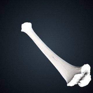3d model of Pan troglodytes troglodytes: Tibia Right