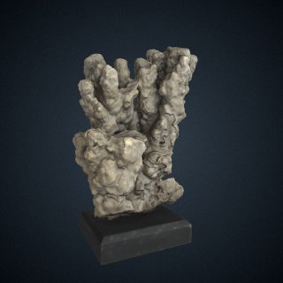3d model of Porites monticulosa