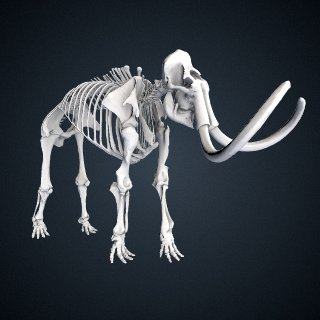 3d model of Mammuthus primigenius (Blumbach)