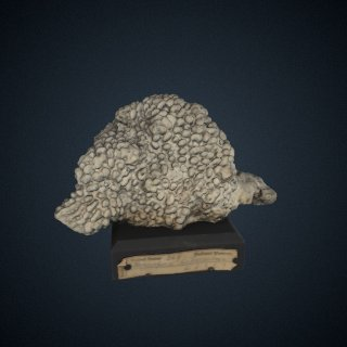 3d model of Montipora danae