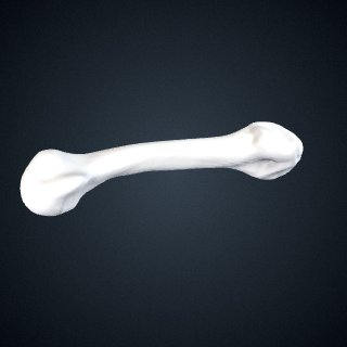 3d model of Pan troglodytes verus: MT5 Right