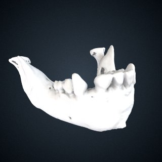 3d model of Pan troglodytes: Mandible