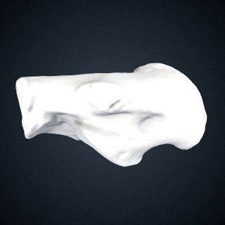 3d model of Pan troglodytes verus: Calcaneus Right