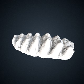 3d model of Stegomastodon sp