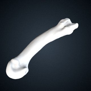 3d model of Pan troglodytes: MT2 Left