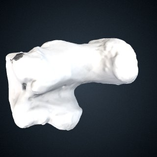 3d model of Gorilla beringei beringei: Calcaneus Left