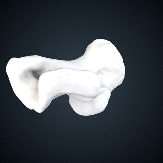 3d model of Pongo abelii: Calcaneus Left