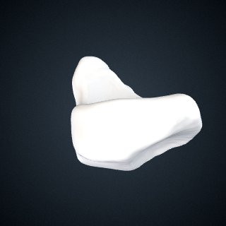 3d model of Pan troglodytes troglodytes: Navicular Left