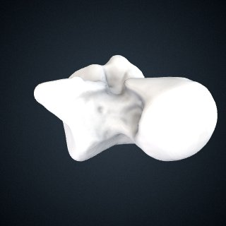 3d model of Pan troglodytes verus: Talus Left