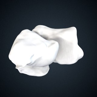3d model of Pongo pygmaeus: Cuneiform3 Cuboid Right