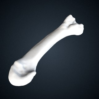 3d model of Pan troglodytes: MT3 Left